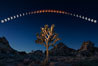 Lunar Eclipse and blood red moon sequence, stars, astronomical twilight, composite image, Joshua Tree National Park, April 14/15 2014. Joshua Tree National Park, California, USA. Image #29202