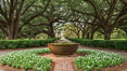 Oak Alley Plantation and its famous shaded tunnel of  300-year-old southern live oak trees (Quercus virginiana).  The plantation is now designated as a National Historic Landmark. Oak Alley Plantation, Vacherie, Louisiana, USA. Image #31005