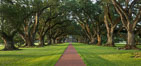 Oak Alley Plantation and its famous shaded tunnel of  300-year-old southern live oak trees (Quercus virginiana).  The plantation is now designated as a National Historic Landmark. Vacherie, Louisiana, USA. Image #31015