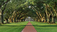 Oak Alley Plantation and its famous shaded tunnel of  300-year-old southern live oak trees (Quercus virginiana).  The plantation is now designated as a National Historic Landmark. Vacherie, Louisiana, USA. Image #31019