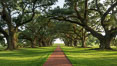 A tunnel of old southern oak trees stretches off toward the Mississippi River.  Oak Alley Plantation and its famous shaded tunnel of  300-year-old southern live oak trees (Quercus virginiana).  The plantation is now designated as a National Historic Landmark. Vacherie, Louisiana, USA. Image #31021