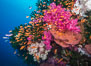 Beautiful South Pacific coral reef, with gorgonian sea fans, schooling anthias fish and colorful dendronephthya soft corals, Fiji. Image #31441
