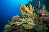 Beautiful Caribbean coral reef, sponges and hard corals, Grand Cayman Island. Cayman Islands. Image #32101