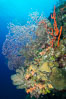 Beautiful Caribbean coral reef, sponges and hard corals, Grand Cayman Island. Grand Cayman, Cayman Islands. Image #32198