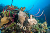 Beautiful Caribbean coral reef, sponges and hard corals, Grand Cayman Island. Cayman Islands. Image #32199