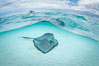 Southern Stingray, Stingray City, Grand Cayman Island. Stingray City, Grand Cayman, Cayman Islands. Image #32232