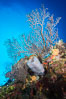 Beautiful Caribbean coral reef, sponges and hard corals, Grand Cayman Island. Cayman Islands. Image #32237