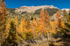 Aspens show fall colors in Mineral King Valley, part of Sequoia National Park in the southern Sierra Nevada, California. USA. Image #32268