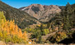 Aspens show fall colors in Mineral King Valley, part of Sequoia National Park in the southern Sierra Nevada, California. USA. Image #32279