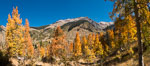 Aspens show fall colors in Mineral King Valley, part of Sequoia National Park in the southern Sierra Nevada, California. USA. Image #32293