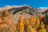Aspens show fall colors in Mineral King Valley, part of Sequoia National Park in the southern Sierra Nevada, California. USA. Image #32294