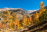 Aspens show fall colors in Mineral King Valley, part of Sequoia National Park in the southern Sierra Nevada, California. USA. Image #32295
