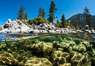 Split view of Trees and Underwater Boulders, Lake Tahoe, Nevada. USA. Image #32355