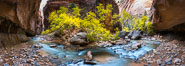 Fall Colors in the Virgin River Narrows, Zion National Park, Utah. USA. Image #32634