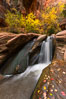 Fall Colors in Kanarra Creek Canyon, Utah. Kanarraville, USA. Image #32647