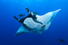 Giant Manta Ray at San Benedicto Island, Revillagigedos, Mexico. San Benedicto Island (Islas Revillagigedos), Baja California, Mexico. Image #33276