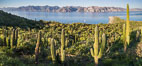 Cardon Cactus on Isla San Jose, Aerial View, Baja California. Isla San Jose, Baja California, Mexico. Image #33692