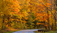 Blue Ridge Parkway Fall Colors, Asheville, North Carolina. USA. Image #34635