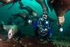 SCUBA Diver and Steller Sea Lions Underwater,  underwater photographer, Hornby Island, British Columbia, Canada. Norris Rocks. Image #36120