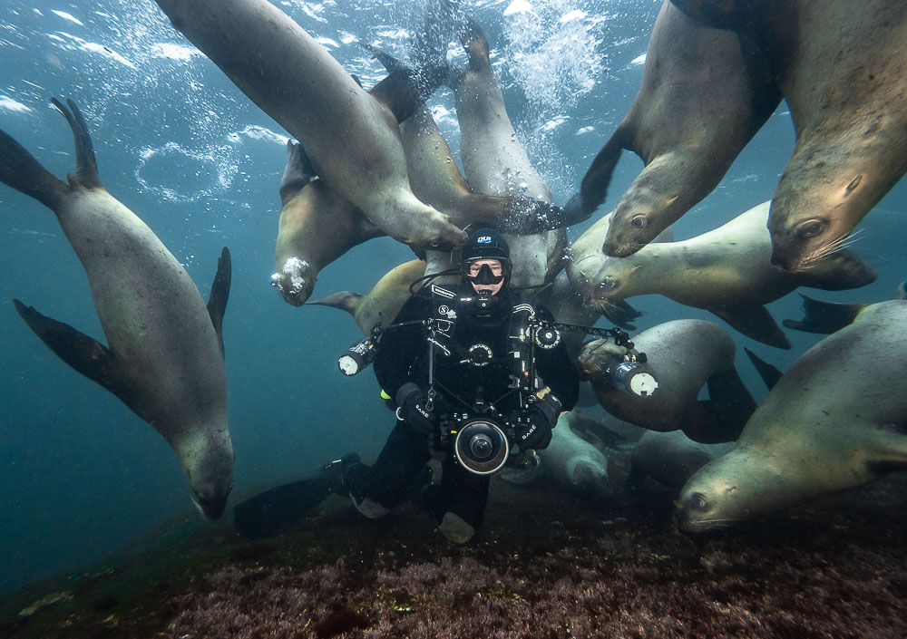 Steller Sea Lion and Diver, Image Copyright Mike Perdue