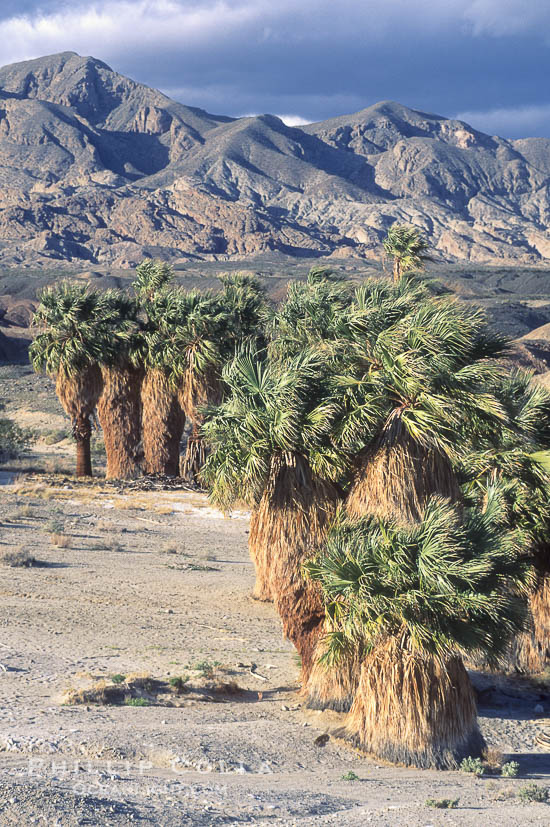 Photo of 17 Palms Oasis