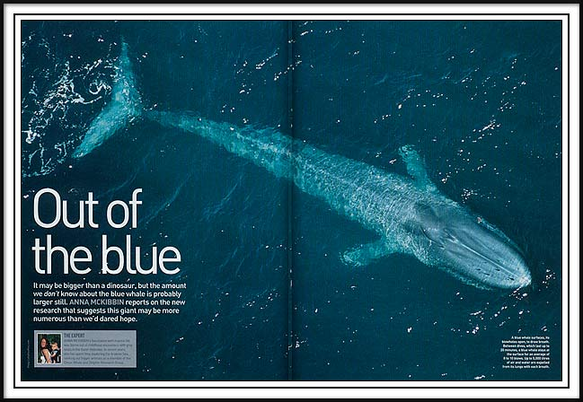 Blue Whale Photo in BBC Wildlife
