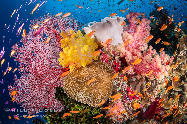 The Insanely Beautiful Coral Reefs of Fiji