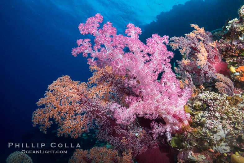 The Spectacular Coral Reef Walls of Mount Mutiny, Bligh Waters, Fiji
