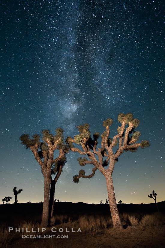 Milky Way Rising Over Joshua Trees