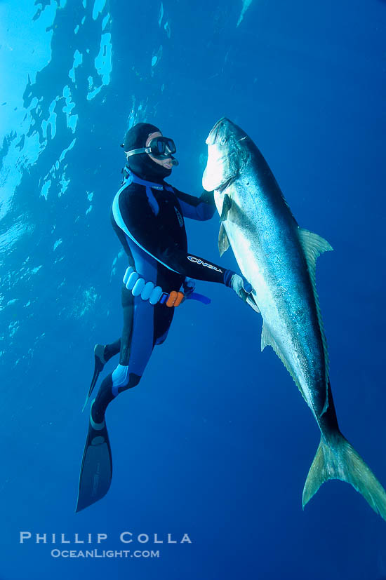 Guadalupe Island Spearfishing World Record