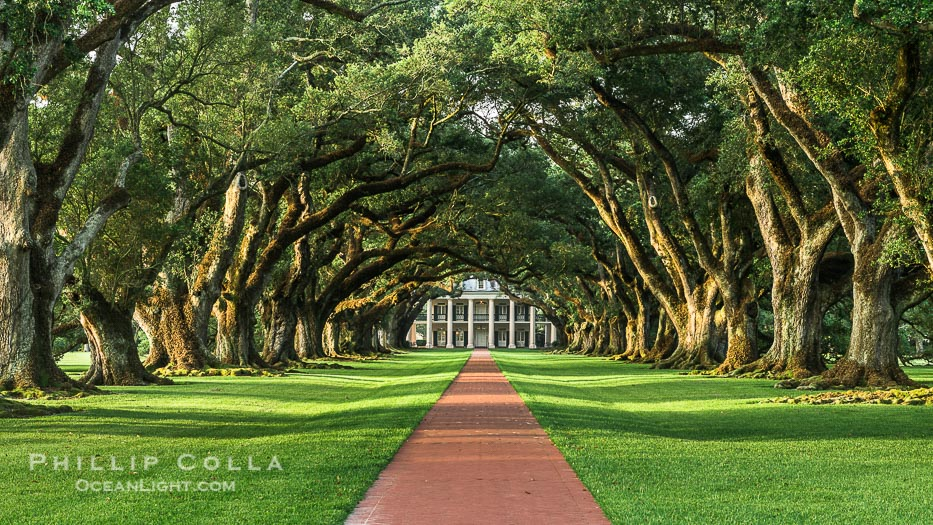 Beautiful Oaks and Perfect Sunrise at Oak Alley Plantation