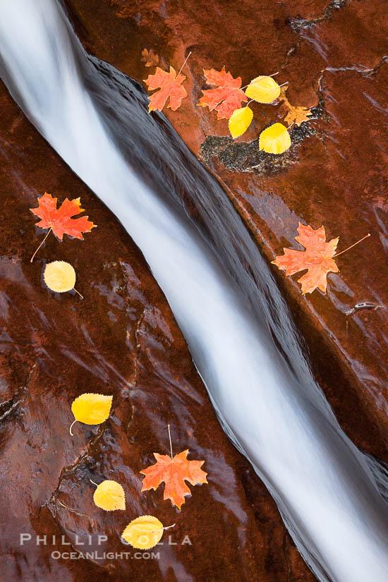 Fall Colors, The Subway, Zion National Park, Utah