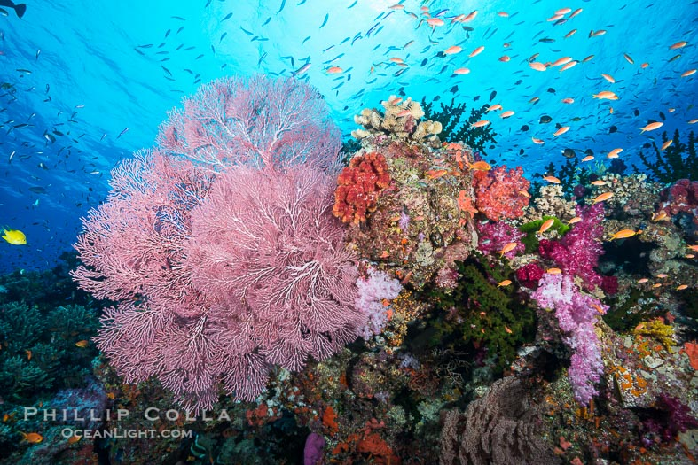 Photographs of Namena Marine Reserve, Fiji Islands