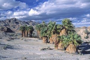 Seventeen Palms Oasis, Borrego Badlands, Anza-Borrego Desert State Park, Borrego Springs, California