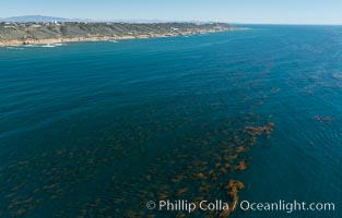 Aerial Photo of Kelp Forests at Cabrillo State Marine Reserve, Point Loma, San Diego