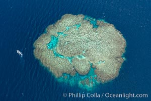 Aerial view of Mount Mutiny, a spectacular coral bommie in the Bligh Waters of Fiji, Vatu I Ra Passage