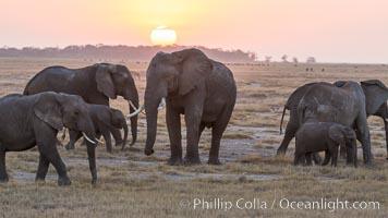 African elephant herd, Amboseli National Park, Kenya., Loxodonta africana, natural history stock photograph, photo id 29537