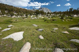 Alpine meadow in Yosemite's High Sierra, on approach on the John Muir Trail to Vogelsang High Sierra Camp, looking south, Yosemite National Park, California
