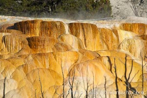 Angel Terrace. Mammoth Hot Springs, Yellowstone National Park, Wyoming, USA, natural history stock photograph, photo id 13608