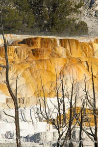 Angel Terrace. Mammoth Hot Springs, Yellowstone National Park, Wyoming, USA, natural history stock photograph, photo id 13609