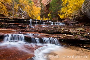 Archangel Falls in autumn, near the Subway in North Creek Canyon, with maples and cottonwoods turning fall colors. Zion National Park, Utah, USA, natural history stock photograph, photo id 26112
