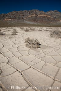 Arid and barren mud flats, dried mud. Eureka Valley, Death Valley National Park, California, USA, natural history stock photograph, photo id 25383