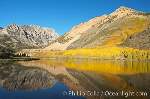 Aspen trees reflected in North Lake, Bishop Creek Canyon, Populus tremuloides, Bishop Creek Canyon, Sierra Nevada Mountains