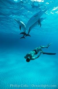 Atlantic spotted dolphin, Olympic swimmer Matt Biondi, sunset, Stenella frontalis