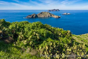 Atop South Coronado Island, aerial photo. Coronado Islands (Islas Coronado), Baja California, Mexico, natural history stock photograph, photo id 35088