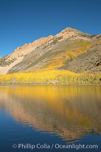 Aspens changing into fall colors, yellow and orange, are reflected in North Lake in October, Bishop Creek Canyon, Eastern Sierra, Populus tremuloides, Bishop Creek Canyon, Sierra Nevada Mountains