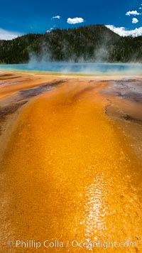 Bacteria mats and Grand Prismatic Spring.  The orange color is due to bacteria which thrive only on the cooler fringes of the hot spring, while the hotter center of the spring hosts blue-colored bacteria. Midway Geyser Basin, Yellowstone National Park, Wyoming, USA, natural history stock photograph, photo id 26964