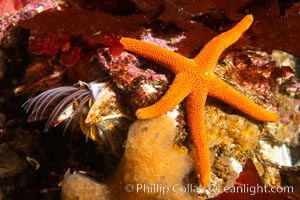 Barnacle and sea star, Browning Pass, Vancouver Island