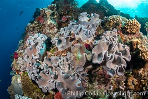 Beautiful Coral Reef Scene, Fiji, Vatu I Ra Passage, Bligh Waters, Viti Levu Island