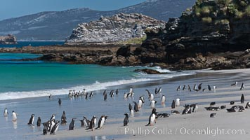 Beautiful white sand beach, on the southern tip of Carcass Island, with gentoo and Magellanic penguins coming and going to sea. Carcass Island, Falkland Islands, United Kingdom, natural history stock photograph, photo id 24007